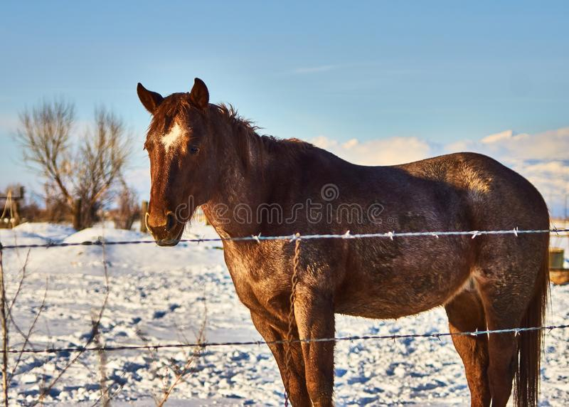 Einziges Pferd stockbild
