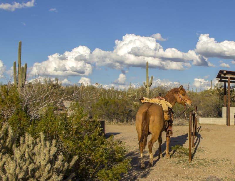Einziges Pferd sattelte oben in Scottsdale, Arizona lizenzfreies stockbild