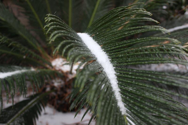 Eis auf Blatt im Winter lizenzfreie stockfotografie