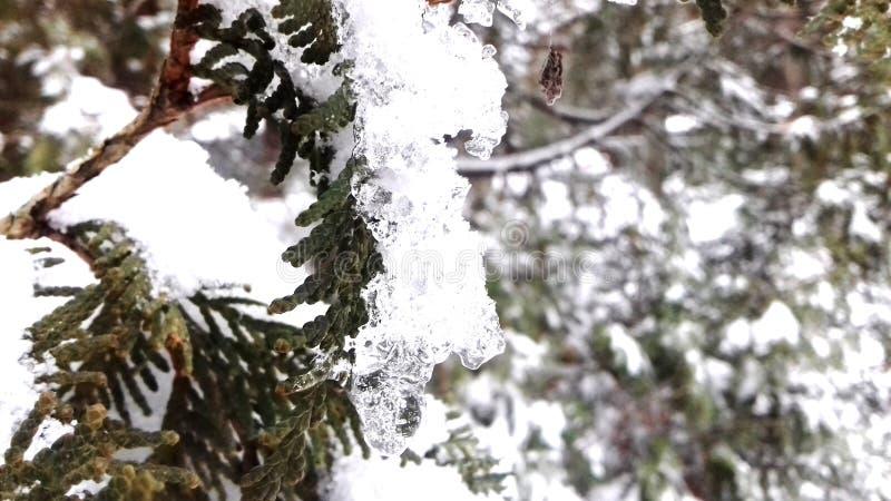 Eis auf Zweigen stockbild