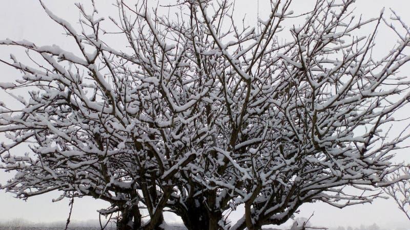 Eis-Baum lizenzfreie stockfotografie