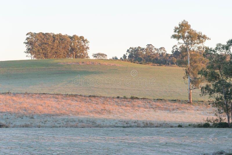 Eis-bedeckte Felder und Frost stockfotos