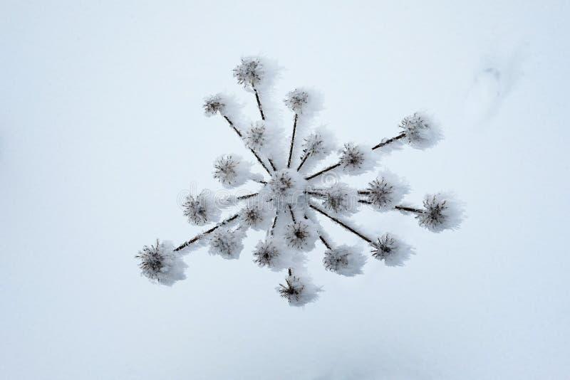 Eis-bedecktes trockenes Betriebsteilmuster stockbild