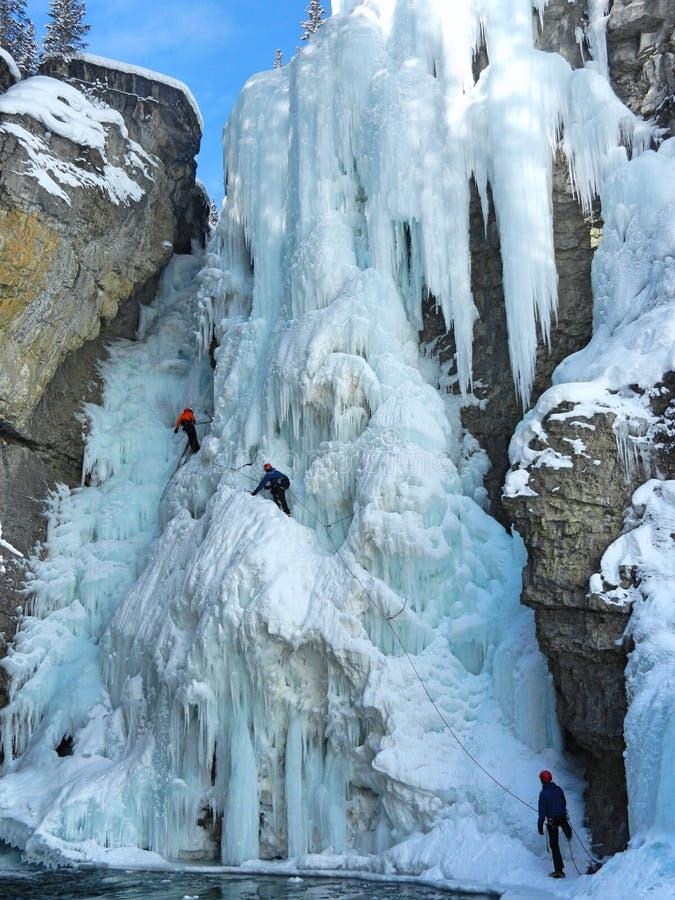 Eis-Bergsteiger in Johnston Canyon stockbilder