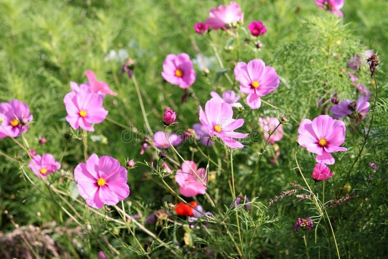 Eis porque nós amamos flores! imagens de stock royalty free