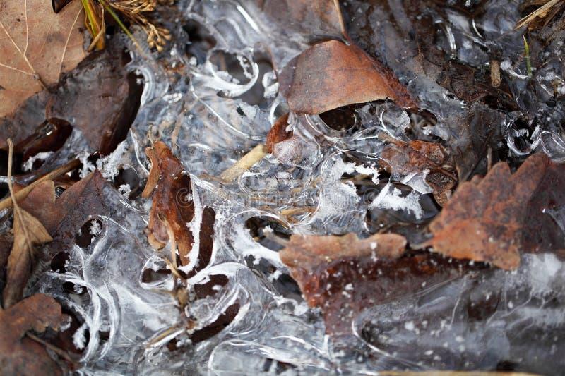 Eis und alte Blätter stockbild