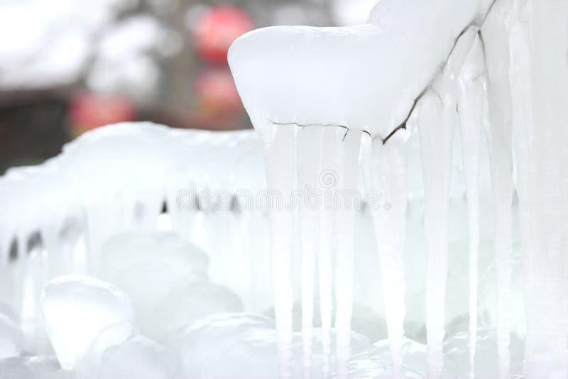 Eis und Eiszapfen auf einem Zweig lizenzfreie stockbilder