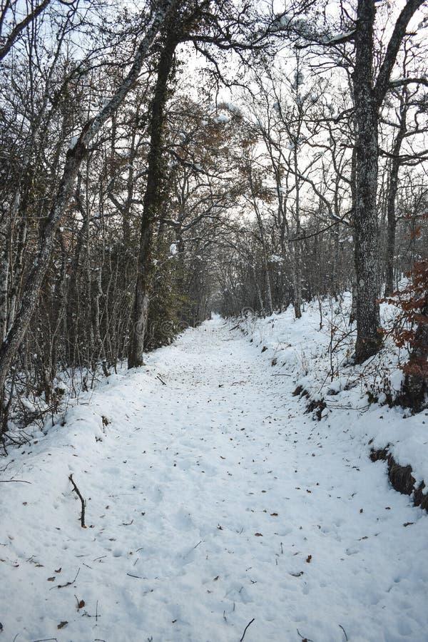 Eis und Schnee in den hohen Bäumen stockfotos