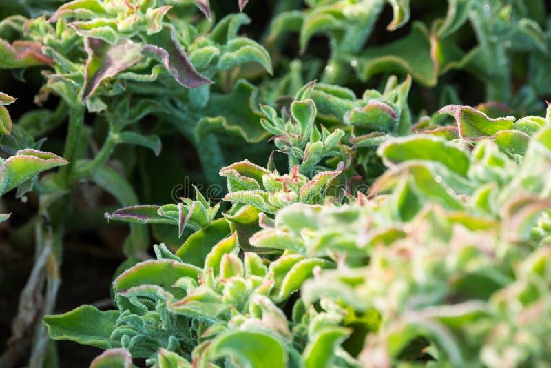 Eisanlage glüht feucht in einen gepflanzten Flecken lizenzfreie stockfotos