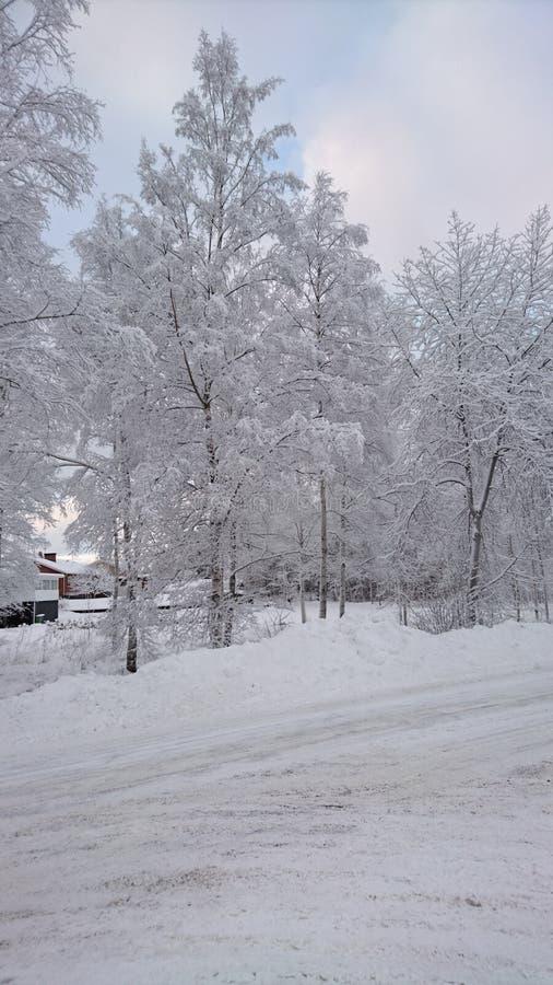 Eisbäume stockfoto