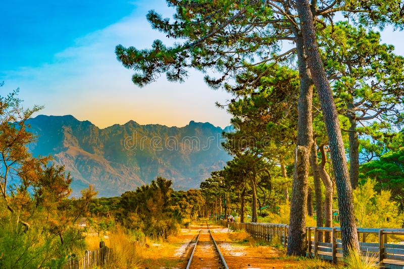 Eisenbahn in Calvi unter Kiefern, Korsika-Insel, Frankreich lizenzfreie stockbilder