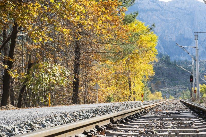 Eisenbahn- oder Straßenbahnbahn in einem schönen Herbstparknebel dampnes lizenzfreie stockfotos