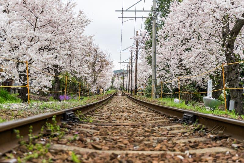 Eisenbahn und Kirschblüte-Baum stockfotografie