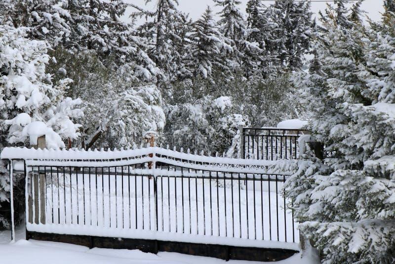 Eisentore und -tannenbäume bedeckt im Schnee Russland, UralJanuary, Temperatur -33C stockbilder
