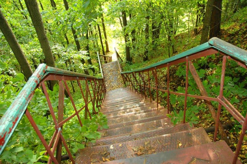 Eisentreppenhaus im Wald lizenzfreie stockfotos