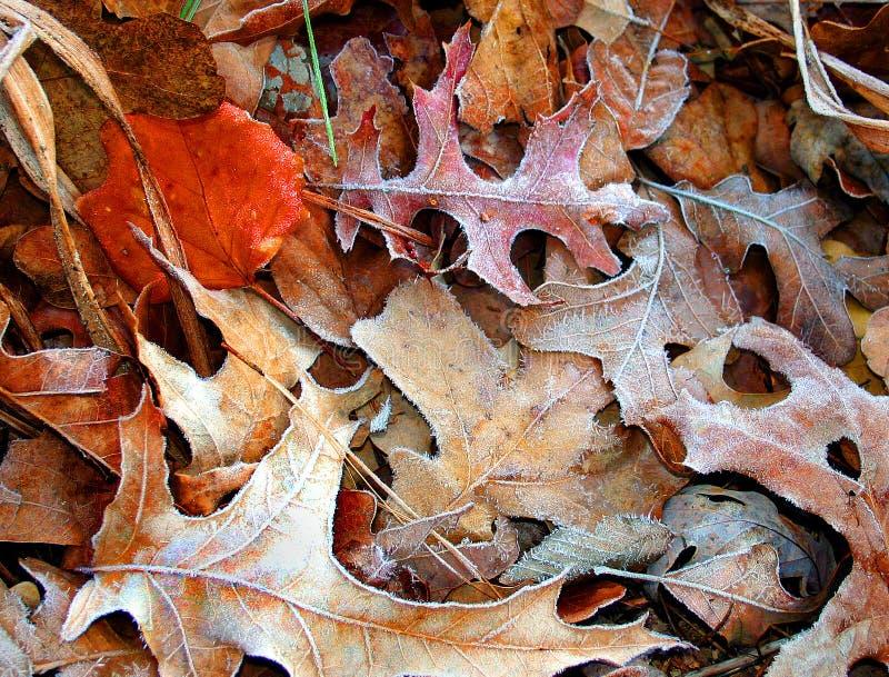 Eisige Blätter stockfotos