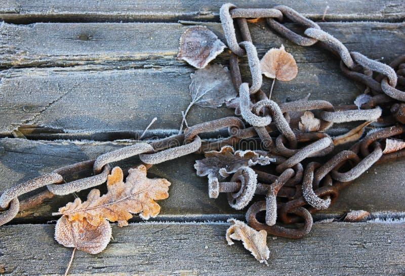 Eisige Blätter und Kette stockbilder