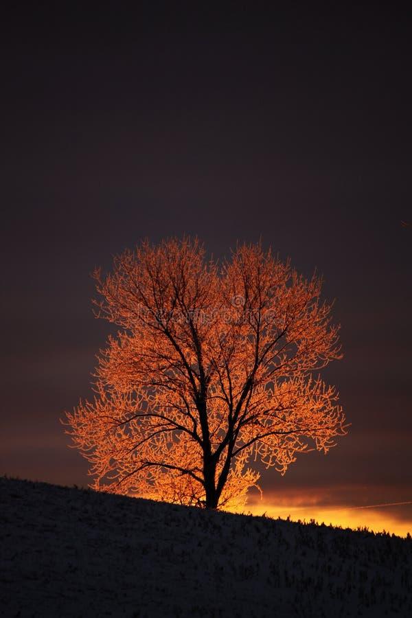 Eisiger Baum lizenzfreie stockfotografie