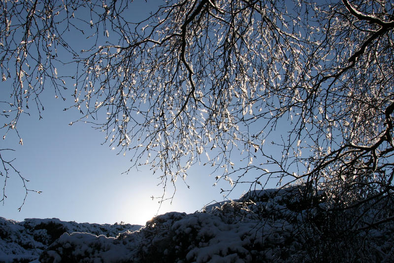 Eisiger Baum mit niedriger Sonne stockfoto
