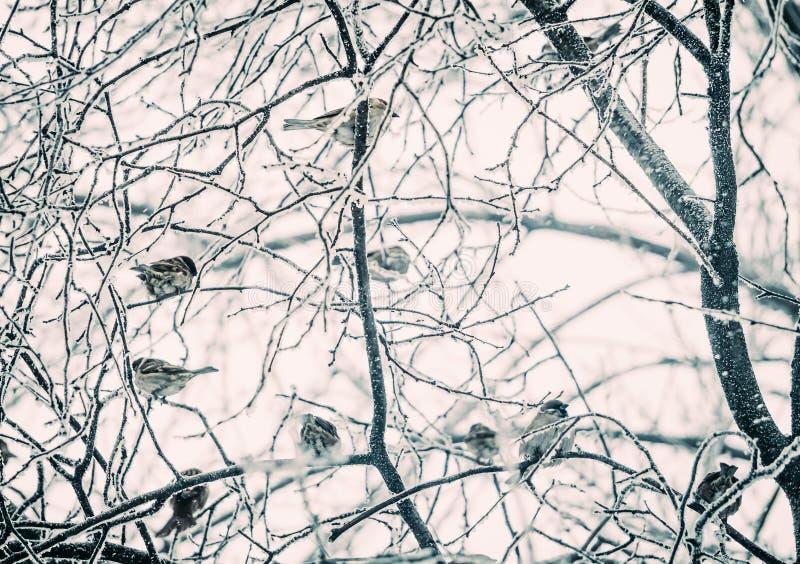 Eisiger Garten Eine Menge von Spatzen auf dem Baum stockfotos