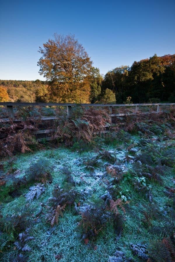 Eisiger Herbstmorgen auf einem landwirtschaftlichen Zustand stockfotos
