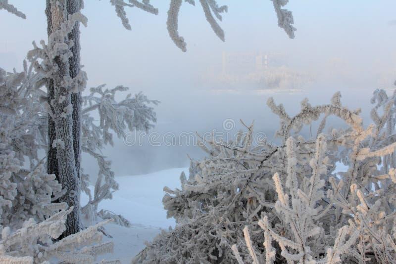 Eisiger Morgen des Winters auf der Flussbank lizenzfreie stockfotos