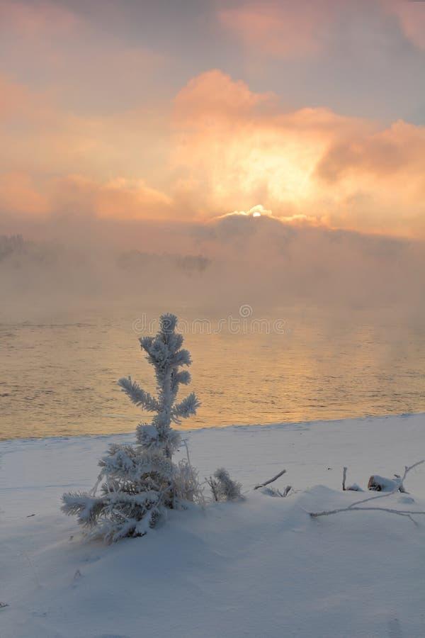 Eisiger Morgen des Winters auf der Flussbank lizenzfreies stockfoto