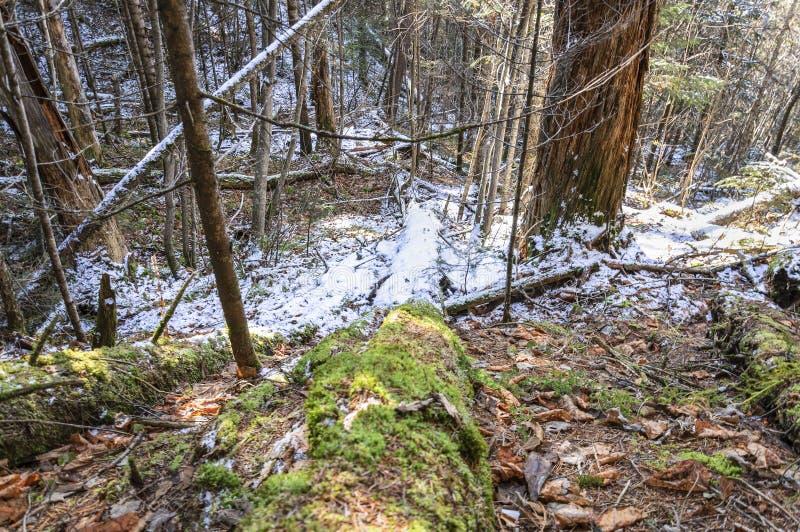 Eisiger Morgen im Wald lizenzfreies stockfoto