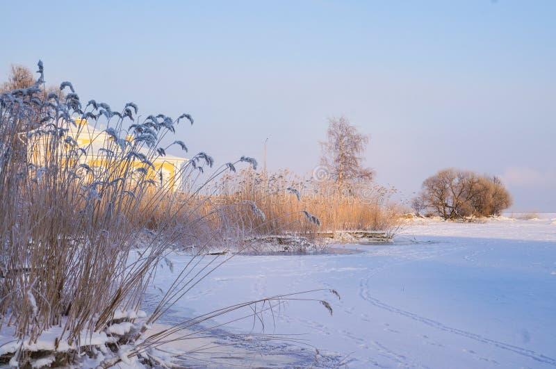 Eisiger Tag des Winters Niederlassung umfasst mit eisigem Raureif lizenzfreies stockfoto