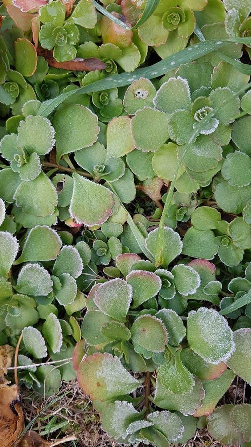 Eisiges Grün stockfoto