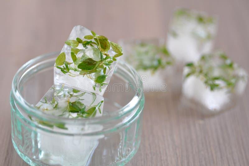 Eiswürfel mit Kräutern stockfotografie