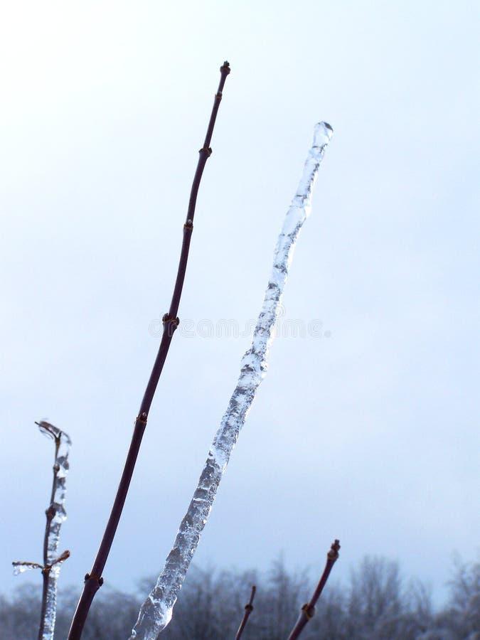 Eiszapfen abgetrennt von einer Niederlassung stockfotos
