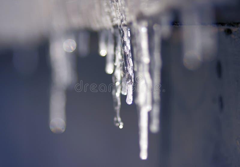 Eiszapfen, die im Tauwetter hängen und tropfen stockfoto