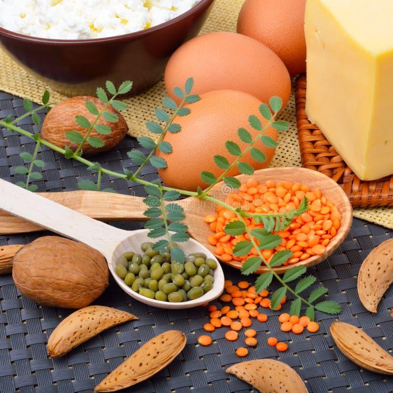 Eiwitvoedsel, eieren, amandelen, linzen, kaas, okkernoot, en gestremde melk stock foto's