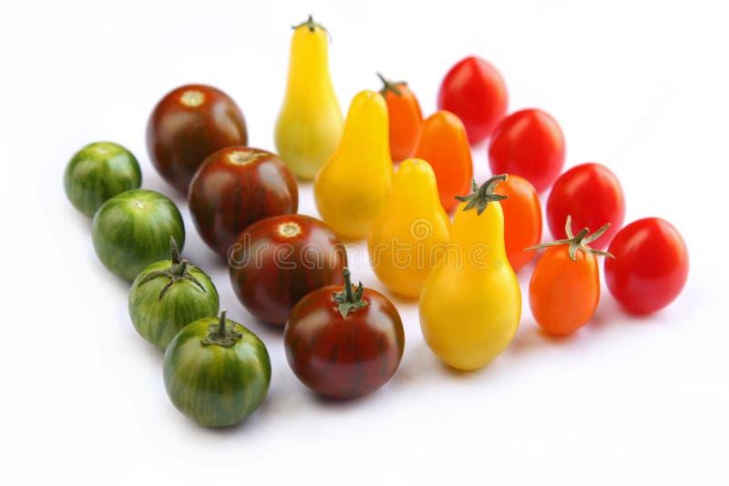 Ejército de tomates imagen de archivo