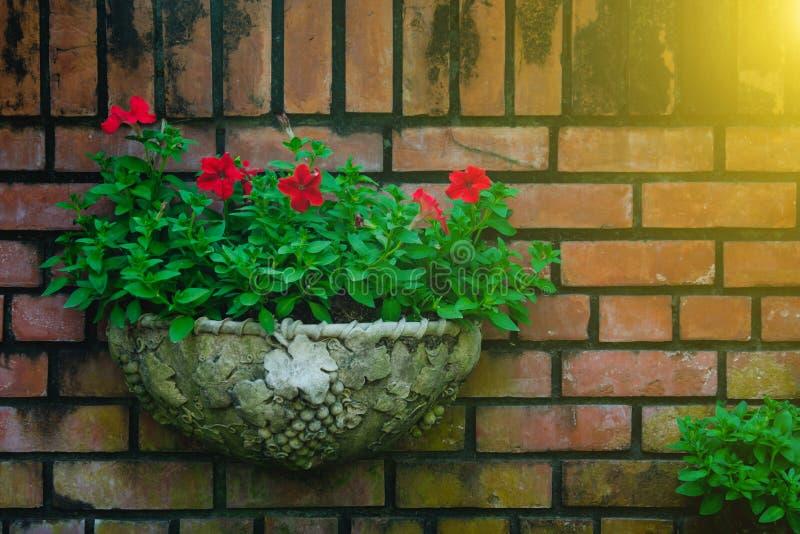 Ejecución al aire libre de la maceta en pequeño jardín y durante verano fotografía de archivo