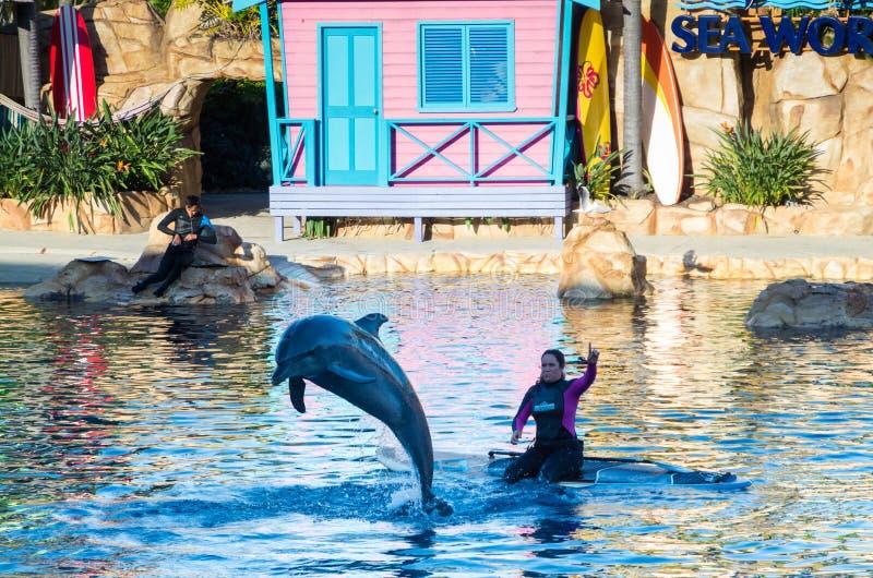 Ejecución de delfínes en el mundo del mar en el Gold Coast foto de archivo libre de regalías