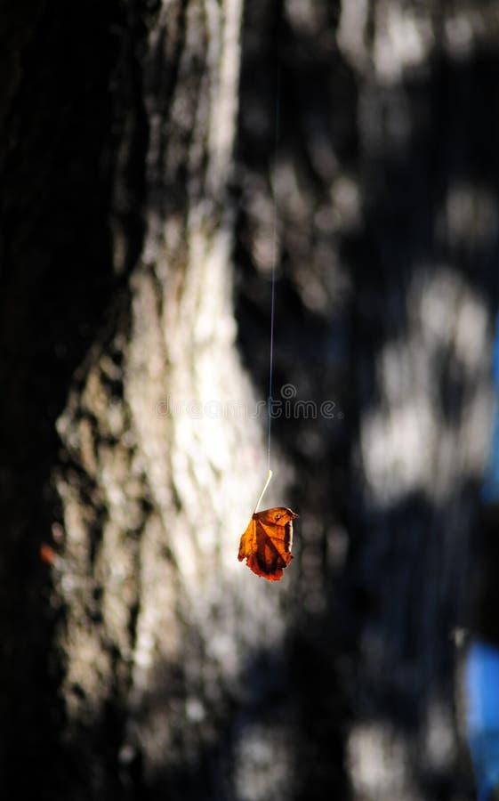 Ejecución de la hoja del otoño en un web de araña foto de archivo