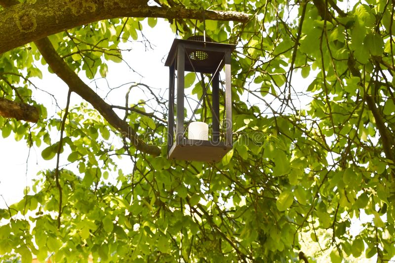 Ejecución de la linterna de la vela en una rama de árbol imagen de archivo libre de regalías