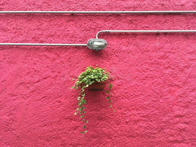 Ejecución de la planta contra una pared rosada fotografía de archivo