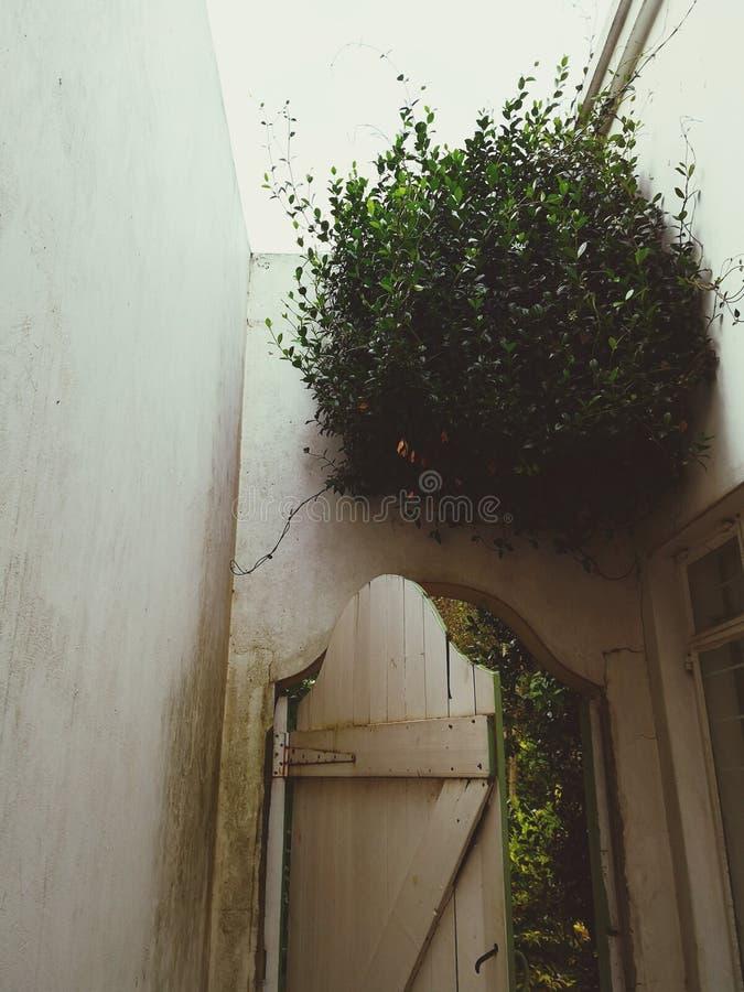 Ejecución del árbol en la pared sobre puerta imagen de archivo
