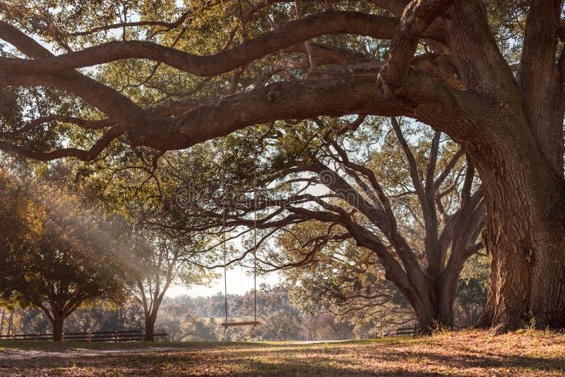 Ejecución del oscilación de la rama de árbol imágenes de archivo libres de regalías