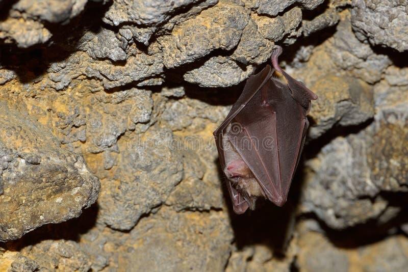 Ejecución del palo en la cueva imagen de archivo libre de regalías