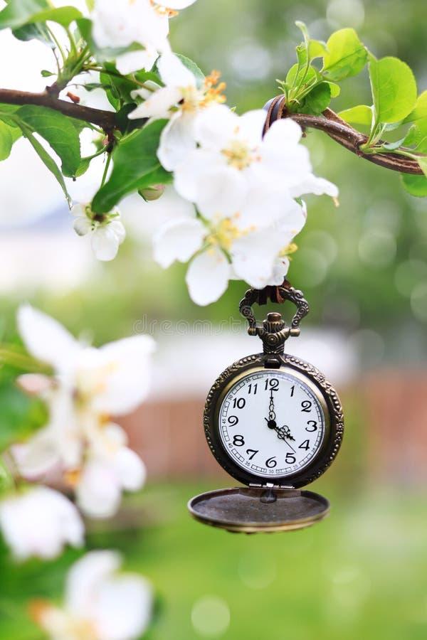 Ejecución del reloj de bolsillo de una rama de un manzano en la plena floración imagen de archivo libre de regalías