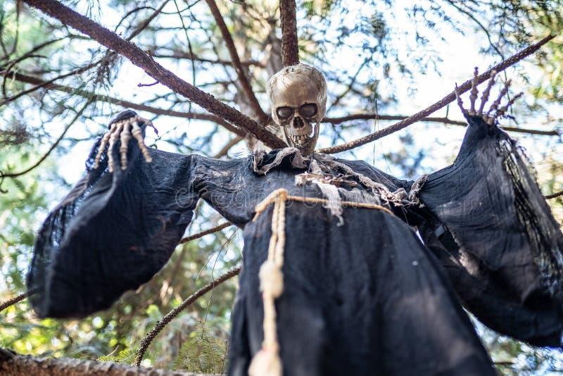 Ejecución esquelética de Halloween en un árbol foto de archivo