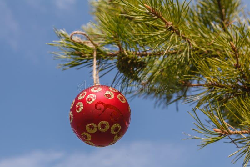 Ejecución roja de la esfera en un árbol de navidad contra el cielo azul fotos de archivo