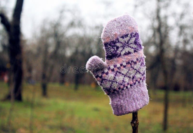 Ejecución rosada del guante de niño de las lanas del invierno en un árbol fotografía de archivo