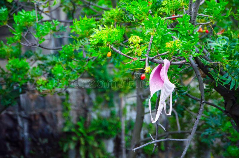 Ejecución rosada del sujetador en la rama del árbol en un jardín imagenes de archivo