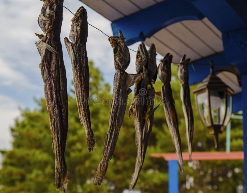 Ejecución secada de los pescados en una cuerda foto de archivo libre de regalías