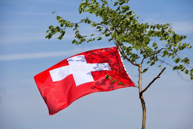 Ejecución suiza de la bandera en un árbol fotografía de archivo